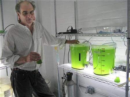 Nicholas Eckelberry, co-founder and inventor of OriginOil, stands next to two test batches of nannochloropsis algae at the company's laboratory in Los Angeles December 12, 2008. OriginOil is in a race with hundreds of other companies to find an affordable way to convert algae to energy. Algae promises to use less land, water and other resources than other biofuels, such as corn. REUTERS/Bernie Woodall
