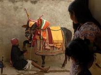 <p>Le mucche sono animali venerati nella religione Indù. REUTERS/Krishnendu Halder (INDIA)</p>