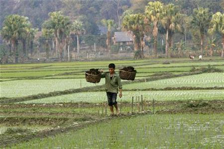 A Vietnamese ethnic Nung farmer carries fertilizer while walking through a paddy field in Son Duong district, Vietnam's northern Tuyen Quang province, 150 km (93 miles) from Hanoi February 13, 2009. REUTERS/Kham