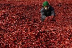 <p>Un agricoltore seleziona peperoncini in Cina. REUTERS/Stringer (CHINA).</p>