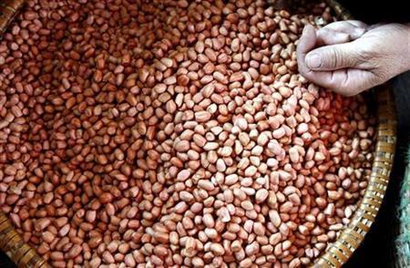 A vendor sells peanuts at the Voi market, south of Hanoi April 17, 2008. REUTERS/Kham
