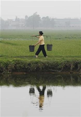 A farmer walks in a paddy field in Mai Lam village, outside Hanoi, March 18, 2009. REUTERS/Kham