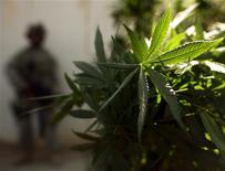 <p>La légalisation de la marijuana ne fait pas partie des réformes auxquelles songe le président Barack Obama, du moins à titre de remède même très secondaire aux problèmes qui accablent l'économie américaine. /Photo d'archives/REUTERS/Goran Tomasevic</p>