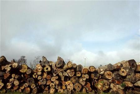 Some 800 logs that were illegally cut from Amazon rainforest lie abandoned on a ranch near Tailandia, 180 km (112 miles) south of Belem, at the mouth of the Amazon River, February 28, 2008. REUTERS/Paulo Santos