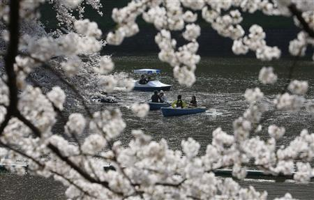 People admire fully-bloomed cherry blossoms at a park in Tokyo April 6, 2009. REUTERS/Kim Kyung-Hoon