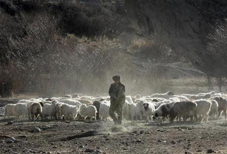 A local resident herds sheep and yaks to another pasture in Bole, Xinjiang Uygur Autonomous Region March 14, 2009. REUTERS/China Daily