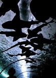 <p>Посетитель разглядывает австралийских бычьих акул в аквариуме в Сиднее 5 августа 2003 года. Полиция австралийского городка Уоррнамбул в штате Виктория озадачена подброшенной к дверям местной газеты живой акулой, и после установления личности намерена предъявить шутникам обвинение в жестоком обращении с животными. REUTERS/David Gray</p>