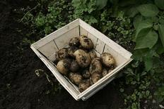 <p>Freshly picked, organically grown potatoes sit in a basket on an allotment in the village of Lane End, Buckinghamshire, southern England, June 23, 2007. REUTERS/Simon Newman</p>
