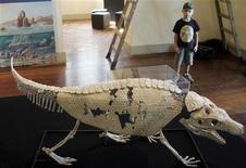 """<p>Un modelo del """"Armadillosuchus arrudai"""" en una exhibición del Jardín Botánico de Río de Janeiro, Brazil, 7 jul 2009. Investigadores brasileños presentaron el martes partes del fósil original de una especie de cocodrilo que afirmaron es única y distinta a todos los reptiles que hayan vivido en la Tierra. REUTERS/Bruno Domingos</p>"""