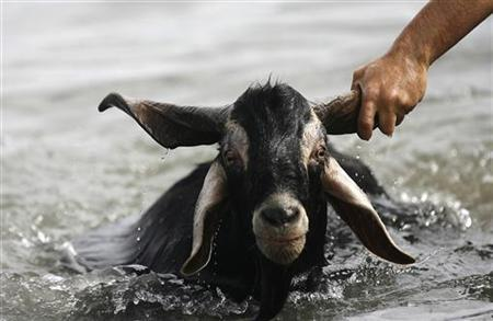 A man holds onto the horn of a goat as it is being bathed in the sea during San Juan (Saint John the Baptist) celebration in Puerto de La Cruz, on Spain's Canary Island of Tenerife, June 24, 2009. REUTERS/Santiago Ferrero