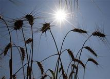 <p>Campi di grano a sud di Budapest. REUTERS/Laszlo Balogh (HUNGARY AGRICULTURE)</p>