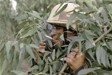 <p>An Iraqi soldier wearing camouflage smokes while on a patrol with U.S. soldiers from 1/8 2th MITT unit to look for explosives, weapons and Al-Qaeda militants at an open field in Mosul June 8, 2008. REUTERS/Eduardo Munoz</p>