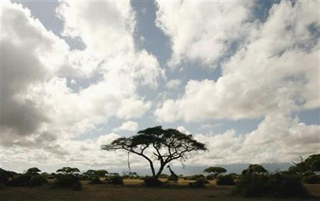 A giraffe stands under a tree at the foot of Mount Kilimanjaro in the Amboseli national park, southern Kenya, November 12, 2006. REUTERS/Finbarr O'Reilly