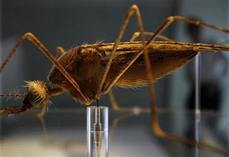 A man walks behind a model of an Anopheles mosquito in the new Darwin Centre at the Natural History Museum, in London September 8, 2009. REUTERS/Stefan Wermuth