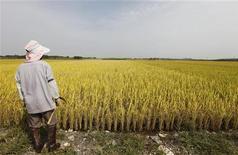 <p>Una risaia a Gimje, in Corea del Sud. REUTERS/Lee Jae-Won (SOUTH KOREA AGRICULTURE BUSINESS FOOD)</p>