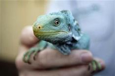 """<p>El único catálogo mundial de animales y plantas conocidos engloba 1,9 millones de especies en todo el planeta, lo que supone un aumento de 114.000 con respecto a la cifra obtenida en un estudio realizado hace tres años, dijeron el martes investigadores australianos. El número de especies actualmente aceptadas y descriptas había ascendido un 6,3 por ciento desde las 1.786.000 enumeradas en el 2006, dijo el ministro de Medio Ambiente australiano, Peter Garret, en la presentación del informe """"Numbers of Living Species in Australia and the World"""" en Cairns. REUTERS/Tim Wimborne/archivo</p>"""