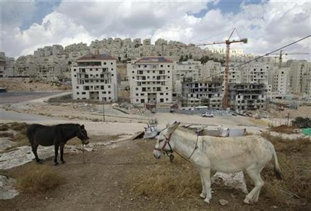 A donkey (R) and a mule (L) stand near a construction site in a settlement near Jerusalem, known to Israelis as Har Homa and to Palestinians as Jabal Abu Ghneim, September 21, 2009. REUTERS/Baz Ratner