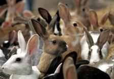 <p>Кролики на рынке в египетской в Александрии 17 апреля 2006 года. Подопытный кролик сумел обзавестись потомством при помощи искусственного пениса, выращенного учеными из его же собственных клеток. REUTERS/Goran Tomasevic</p>