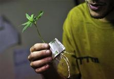 <p>Un lavoratore israeliano tiene in mano una pianta di cannabis a uso medicinale raccolta vicino a Ashkelon. la foto è del 27 agosto scorso. REUTERS/Amir Cohen</p>