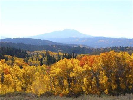 Aspen trees in the Caribou-Targhee National Forest in Idaho are seen in this undated photograph. T REUTERS/U.S. Forest Service/Handout