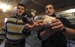 <p>Ivan e Saimir mostrano le quaglie allevate presso il carcere milanese di Opera. REUTERS/Paolo Bona</p>
