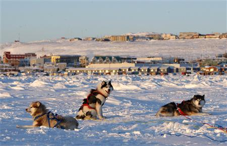 Sled dogs rest on the frozen Frobisher Bay where the G7 finance ministers' meeting will take place in Iqaluit, Nunavut, February 5, 2010. REUTERS/Chris Wattie