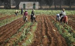 <p>Farm workers on a farm in South Africa, September 30, 2008. REUTERS/Siphiwe Sibeko</p>