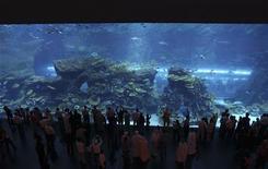 <p>Люди стоят перед аквариумом в торговом центре Dubai Mall 20 ноября 2008 года. Посетители и работники части магазинов торгового центра Dubai Mall - одного из крупнейших в мире - были эвакуированы из-за протечки гигантского аквариума, сообщила полиция. REUTERS/Ahmed Jadallah</p>