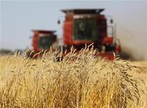 <p>The last stands of wheat remain before being harvested by the Sawyer family near Acme, Alberta, September 23, 2009 file photo. REUTERS/Todd Korol</p>