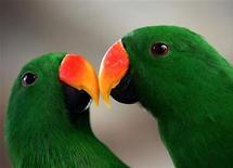 """<p>Casal de papagaios em zoológico de Jacarta em 2005. A autora Stefanie Iris Weiss escreveu sobre a importância de uma vida sexual ecologicamente sustentável em seu novo livro """"Eco-Sex."""" 12/08/2005 REUTERS/Darren Whiteside</p>"""