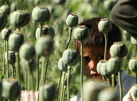 An Afghan boy looks from a poppy field as U.S. Marines patrol a village in the Golestan district of Farah province, May 5, 2009. REUTERS/Goran Tomasevic