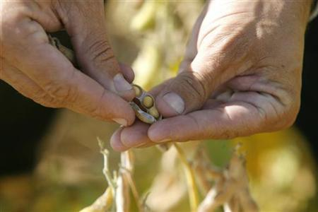 A farmer harvests soy beans on the outskirsts of Gualeguaychu city, 230 km (143 miles) north of Buenos Aires, in this March 30, 2008 file photo. REUTERS/Andres Stapff