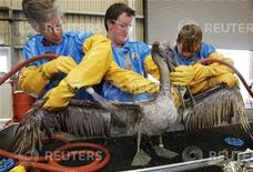 <p>Veterinari al lavoro in Louisiana per ripulire un pellicano dalle tracce di petrolio. REUTERS</p>