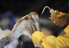<p>Dr. Erica Miller, a member of the Louisiana State Wildlife Response Team, cleanses a pelican of oil at the Clean Gulf Associates Mobile Wildlife Rehabilitation Station on Ft. Jackson in Plaquemines Parish, La., May 15, 2010. REUTERS/(U.S. Navy/Justin Stumberg/Handout</p>