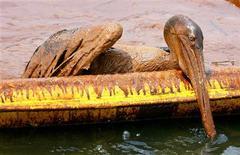 <p>Un pelícano cubierto de crudo intenta subir a un contenedor de petróleo en la colonia de aves Queen Bess cerca de Luisiana, EEUU, jun 5 2010. BP planea duplicar a 20.000 barriles por día la cantidad de crudo que captura de su pozo dañado en el Golfo de México, mientras que la costa de Estados Unidos deberá luchar durante años para superar la catástrofe, dijo el lunes la Guardia Costera. REUTERS/Sean Gardner ENVIRONMENT)</p>