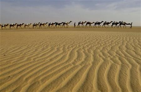 A caravan of camels loaded with sacks of raw salt travels across the desert near Tichit, Mauritania December 5, 2006. REUTERS/David Rouge