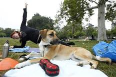<p>Laika sits while owner Kat Wilson works out during the Thank Dog! Bootcamp fitness class in Burbank, California, June 18, 2010. REUTERS/Mario Anzuoni</p>