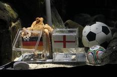 <p>Après avoir réalisé un sans-faute dans ses pronostics sur les matches de l'Allemagne au premier tour, Paul le poulpe, qui vit dans l'aquarium d'Oberhausen, a prédit la victoire de la Mannschaft contre l'Angleterre en huitième de finale de la Coupe du monde, dimanche. /Photo prise le 25 juin 2010/REUTERS/Wolfgang Rattay</p>