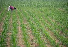 <p>A Chinese worker tends a corn plantation on the outskirts of Beijing June 17, 2005. REUTERS/Jason Lee ALF/CCK</p>