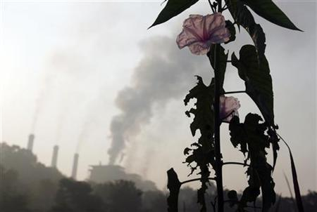 A flower grows close to a thermal power plant on the outskirts of Nagpur December 9, 2009. REUTERS/Arko Datta