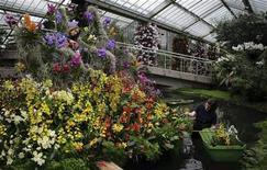 <p>Садоводы ухаживают за растениями в Королевских ботанических садах в Кью 4 февраля 2010 года. Каждый пятый из 380.000 видов растений находится на грани исчезновения из-за деятельности человека, выяснили британские ученые. REUTERS/Kevin Coombs</p>