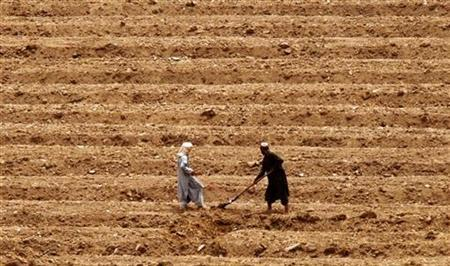An Afghan couple work in field near Camp Masoom Ghar in Panjwa'i district, south-west of Kandahar City May 16, 2010. REUTERS/Nikola Solic