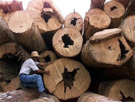 A Brazilian woodcutter marks trees for inventory in a forest certified for sustainable management in Itacoatiara, northern Brazil, October 7. REUTERS/Paulo Whitaker