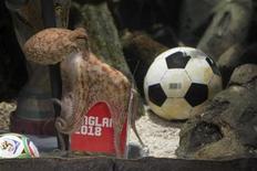 """<p>Imagen de archivo del pulpo Paul, que se hizo famoso durante el último mundial de fútbol, en Oberhausen, Alemania. Ago 20 2010 Poco después de la muerte del venerado adivino de ocho patas del mundo del fútbol, una película china de nombre """"Kill Octopus Paul"""" (Matar al pulpo Paul) cuestiona qué hay detrás del pulpo que predijo correctamente los resultados del Mundial. REUTERS/Sea Life Centre/Pitch/Handout</p>"""