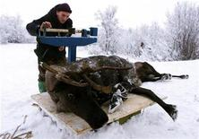 <p>A farm worker weighs a reindeer in the village of Krasnoye, some 50 km from the town of Naryan-Mar in the autonomous Nenets district in Russia's far north November 26, 2000, where indigenous herders slaughter reindeers for their meat, hide and antlers. REUTERS/Sergei Karpukhin</p>