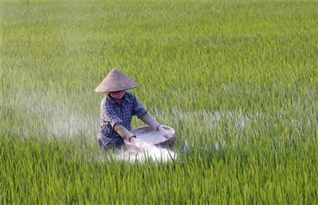 A farmer throws fertilizer on a rice paddy field in Dong Xung village, outside Hanoi, April 19, 2010. REUTERS/Kham