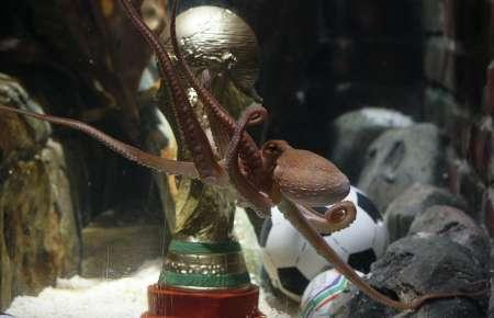 File picture shows Germany's so-called oracle octopus Paul as it swims in front of a mock soccer World Cup trophy in his tank at the Sea Life Aquarium in the western German city of Oberhausen July 12, 2010. REUTERS/Wolfgang Rattay/File