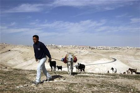 A Palestinian shepherd leads a donkey as his goats graze near the West Bank Jewish settlement of Maale Adumim (seen in back), near Jerusalem January 24, 2011. REUTERS/Ammar Awad