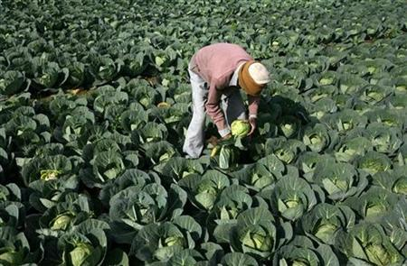 A farmer works in his vegetable field in Jammu January 13, 2011. REUTERS/Mukesh Gupta