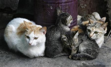 Cats sit in front of a pot in Vietnam's northern Hoa Binh province, outside Hanoi, April 2, 2009. REUTERS/Kham (VIETNAM ANIMALS SOCIETY)